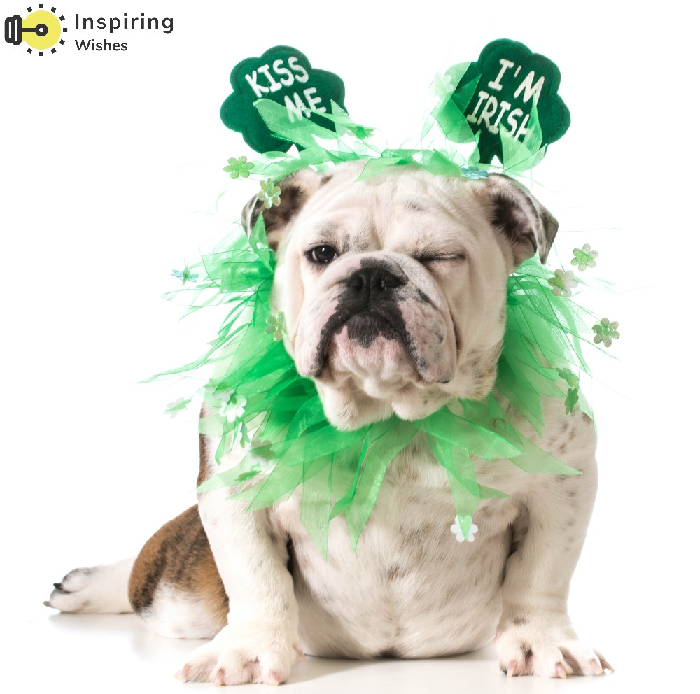 Free Funny St Patrick's Day Images